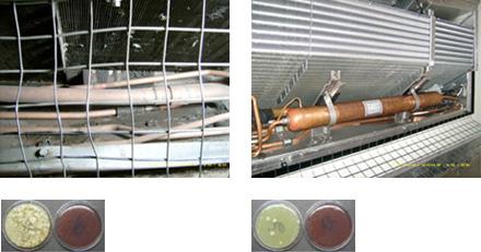 HACCP-Reinigung